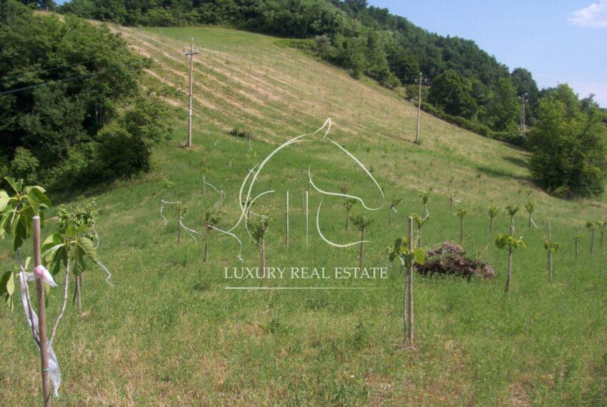 frutteto e ulivi 2008